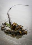 Havsväxtskulptur royaltyfri fotografi