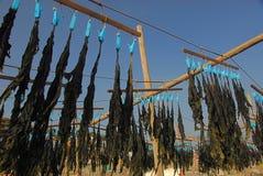 Havsväxtuttorkning i solen royaltyfri foto