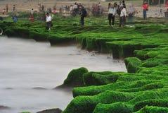 Havsvåg och havsväxt Royaltyfria Bilder