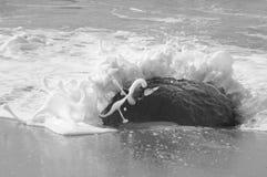 Havsvåg som bryter på en vagga royaltyfria bilder