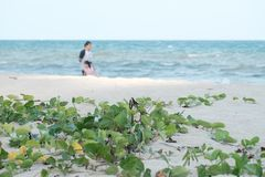 Havsvågor på den rena stranden med solljus och att göra suddig en kvinna med en unge som promenerar stranden arkivbilder