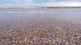 Havsvågor på sandstranden med små skal, stormhav stock video