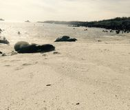 Havsvarg i stranden Royaltyfri Fotografi