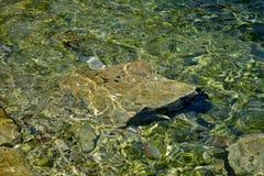 Havsvattnet av Rovinj, Kroatien Arkivbilder