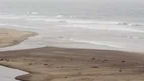 Havvågor på sandstranden med strömmen som flödar in i havet arkivfilmer