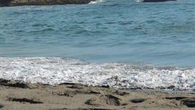 Havvågor som bryter på stranden nära Brookings Oregon