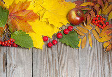 Haw ash and apple in autumn composition Stock Photos