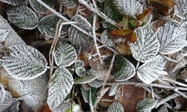 Haw frost 2 Royalty Free Stock Photography