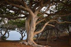 Hawaï, Groot Eiland stock foto's