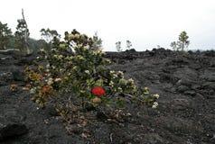 "HawaiÊ"" mim parque nacional dos vulcões Fotos de Stock Royalty Free"
