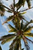 Hawai Fotos de archivo libres de regalías