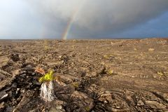 Hawai rainbow on lava Stock Images