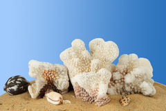 Hawaian corals. In blue gradient background Royalty Free Stock Images