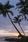 Hawaian sunset. Sunset on the Big island of Hawaii Royalty Free Stock Photo