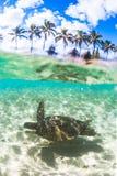 Hawaiansk sköldpadda för grönt hav som kryssar omkring i det varma vattnet av Stilla havet royaltyfria foton