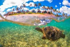 Hawaiansk sköldpadda för grönt hav som kryssar omkring i det varma vattnet av Stilla havet Arkivfoto