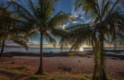 Hawaiansk strandpalmträdsolnedgång Oahu Royaltyfria Foton