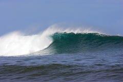 hawaiansk wave fotografering för bildbyråer