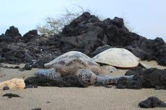 hawaianska havssköldpaddor Royaltyfria Bilder