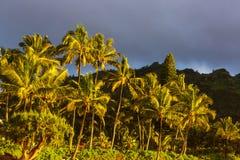 hawaii стоковая фотография