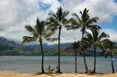 Hawaii. Palm trees on the bay in the beautiful and exotic Kauai, Hawaii Royalty Free Stock Images