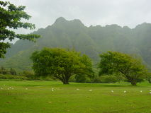 Hawaii. A very green Hawaii with birds and blue sky royalty free stock photos