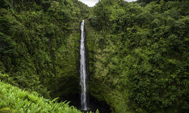 Hawaii Akaka Falls Royalty Free Stock Image