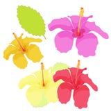 Hawaii av hibiskusfärguppsättningen också vektor för coreldrawillustration Royaltyfri Fotografi