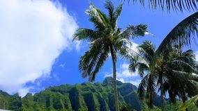 Hawaii royalty free stock photography