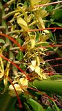 Hawaii Bee Royalty Free Stock Image