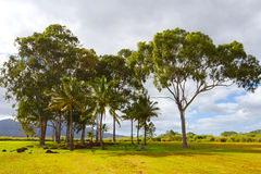 Hawaii Birthing Stones Trees. A scenic shot of the historical and tourist attraction the birthing stones in Hawaii along the north shore of Oahu. This grove of stock photo