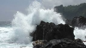 Hawaii coastline Big Island stock video