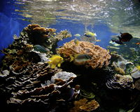 Hawaii Coral Reef stock images