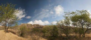 Hawaii Diamond Head. View of Diamond Head from the ground in Oahu, Hawaii. Also looks like African wilderness stock image