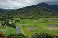 Hawaii Farm Fields. Landscape of farm fields and distant mountains at Kauai, Hawaii (USA Stock Image