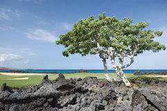 Hawaii Golf Course. The sea side green of a golf course on the Big Island of Hawaii with volcanic lava in the foreground and Pacific ocean in the background royalty free stock photography