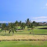 Hawaii-Golf in der Küstenpalmen-Waldung Stockfotos