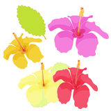 Hawaii of hibiscus color set. vector illustration. Hawaii of hibiscus color set vector illustration Royalty Free Stock Photography