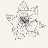 Hawaii hibiscus flower, leaf for Coloring book page for adult Stock Photo