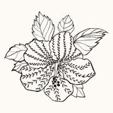 Hawaii hibiscus flower, leaf  illustration Royalty Free Stock Photography