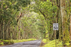 Hawaii island forest tree ceiling road. On sunny day Stock Photos