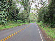 Hawaii jungle road. Two lane road through a tropical jungle on the big island of Hawaii Royalty Free Stock Photos