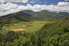 Hawaii kauai fält Arkivfoton