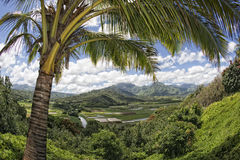 Hawaii kauai fields aerial view. Hawaii kauai fields on sunny day Stock Photos