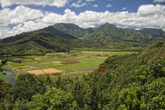 Hawaii kauai fields. On sunny day Stock Photos