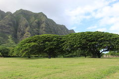 Hawaii landscape in cloudy day. Hawaiian landscape with monkey pod trees and mountains Royalty Free Stock Images