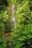 hawaii maui vattenfall Royaltyfria Foton