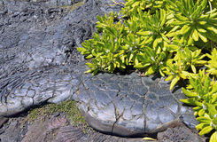 Hawaii Mottled Lava. Royalty Free Stock Photography