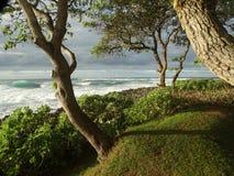 hawaii oahu Arkivbilder