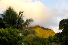 Hawaii Oahu Koolau Mountains at dawn. Sunrise light on the Koolau Mountains in Oahu Hawaii with a palm tree, mango tree, and tiare in the foreground Royalty Free Stock Image